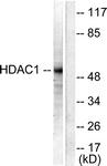 C0221-1 - HDAC1