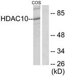 C0222-1 - HDAC10