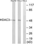 C0224-1 - HDAC3