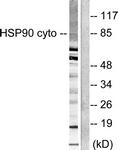 C0234-1 - HSP90AA1 / HSP90 alpha