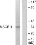 C0254-1 - MAGE-1