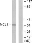 C0258-1 - MCL1
