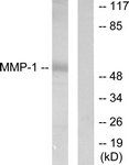 C0262-1 - MMP-1