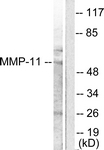 C0264-1 - MMP-11