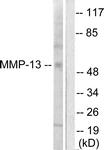 C0265-1 - MMP-13