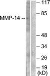 C0266-1 - MMP-14 / MT1-MMP
