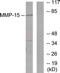 C0267-1 - MMP-15