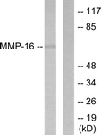 C0268-1 - MMP-16