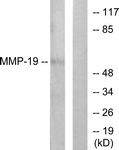 C0269-1 - MMP-19