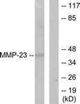 C0271-1 - MMP-23