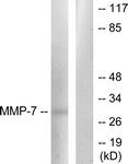 C0273-1 - MMP-7
