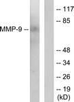 C0275-1 - MMP-9