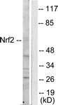 C0279-1 - NFE2L2