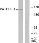 C0296-1 - PTCH1