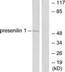 C0308-1 - Presenilin-1