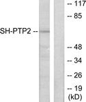 C0321-1 - PTPN11 / PTP2C