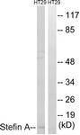 C0329-1 - Cystatin-A