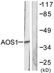 C0351-1 - SAE1 / AOS1