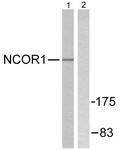C0358-1 - NCOR1