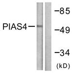 C0364-1 - PIAS4