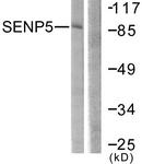 C0368-1 - SENP5