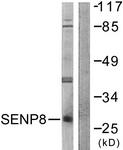 C0371-1 - SENP8