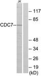 C10020-1 - CDC7