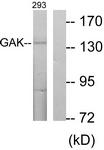 C10064-1 - GAK