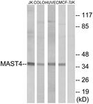C10066-1 - MAST4