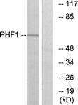 C10090-1 - PHF1