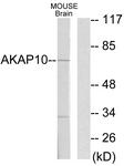 C10110-1 - AKAP10