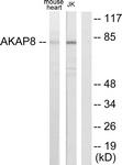 C10121-1 - AKAP8