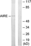 C10123-1 - AIRE / APECED