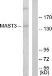 C10132-1 - MAST3