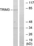 C10169-1 - TRIM3 / BERP