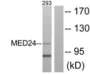 C10176-1 - MED24