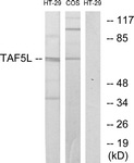 C10185-1 - TAF5L