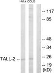 C10195-1 - CD256 / APRIL