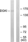 C10197-1 - DAG kinase iota