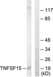 C10215-1 - TNFSF15