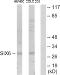 C10233-1 - SIX6