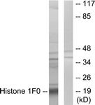 C10293-1 - Histone H1.0