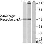 C10309-1 - Alpha-2A adrenergic receptor / ADRA2A