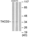 C10320-1 - TACSTD2