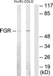 C10321-1 - FGR / SRC2