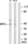 C10366-1 - IRF2