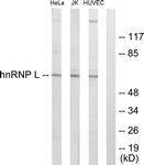 C10375-1 - hnRNP-L / HNRNPL