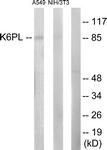 C10412-1 - PFKL