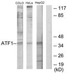 C10419-1 - ATF1