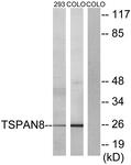 C10423-1 - Tetraspanin-8